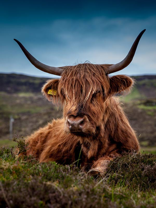 Great Wildlife - Craigmoss Highland Homes